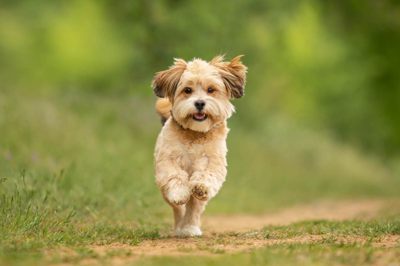 Cute Puppy - Katrina Wilson Dog Photographer Bedfordshire -1