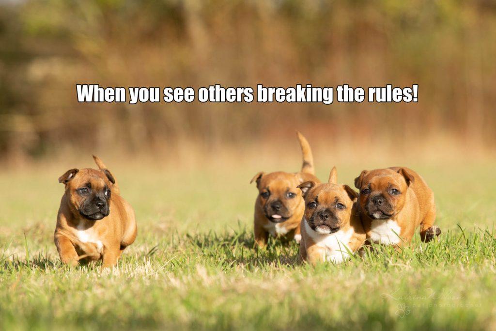 Lockdown Coronavirus Meme Katrina Wilson Dog Photography Bedfordshire-1