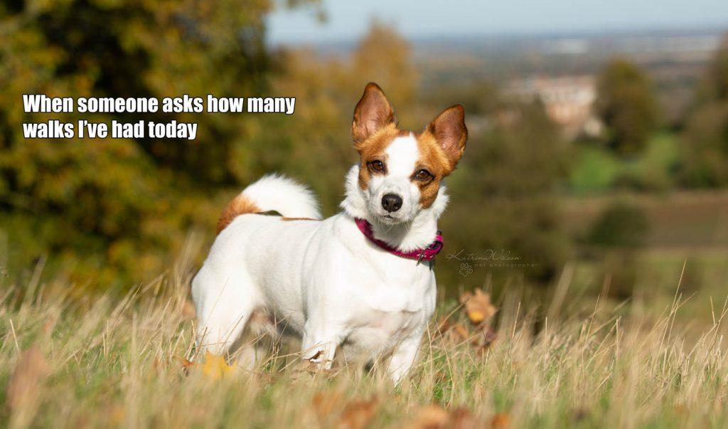Lockdown Coronavirus Meme Katrina Wilson Dog Photography Bedfordshire-10