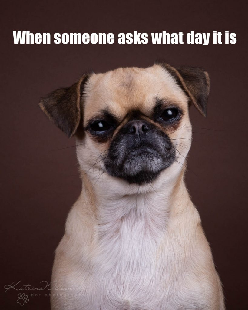 Lockdown Coronavirus Meme Katrina Wilson Dog Photography Bedfordshire-2