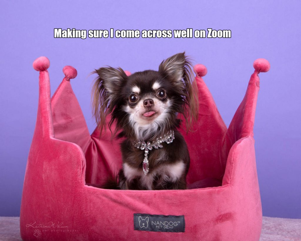 Lockdown Coronavirus Meme Katrina Wilson Dog Photography Bedfordshire-3