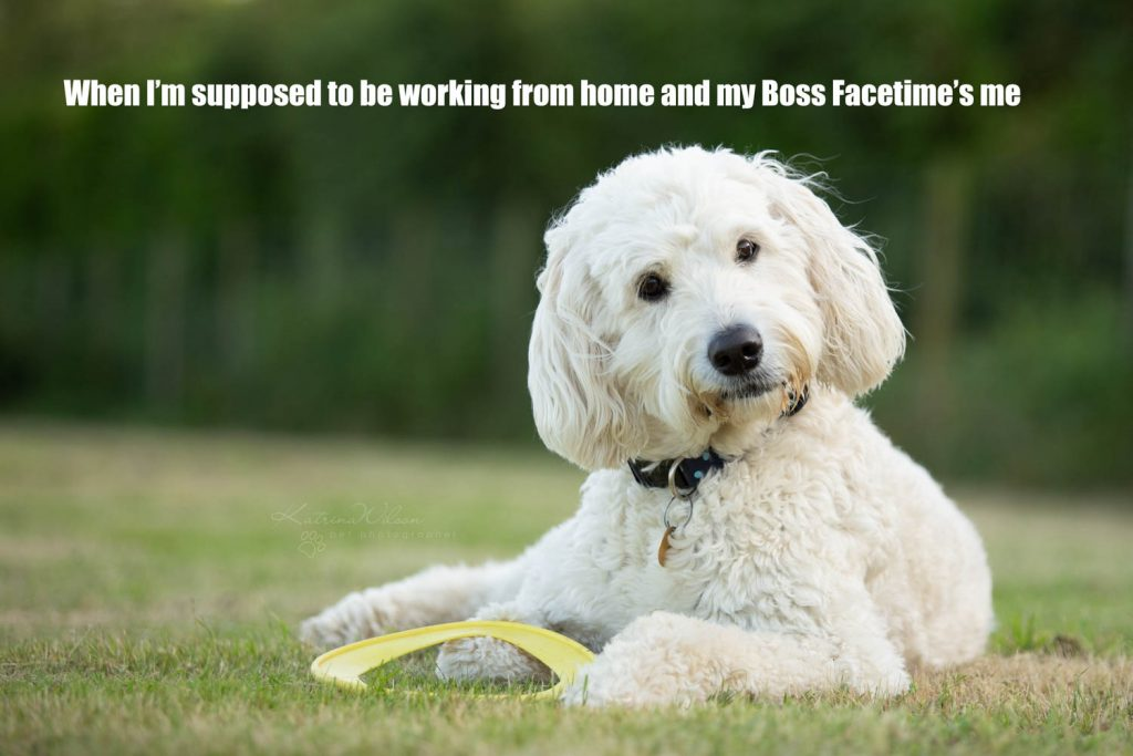 Lockdown Coronavirus Meme Katrina Wilson Dog Photography Bedfordshire-4