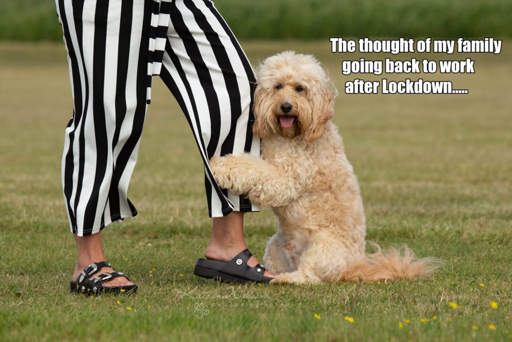 Lockdown Coronavirus Meme Katrina Wilson Dog Photography Bedfordshire-5