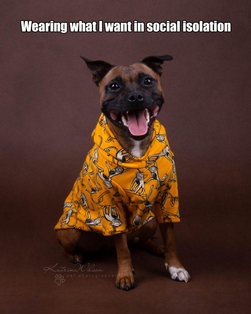 Lockdown Coronavirus Meme Katrina Wilson Dog Photography Bedfordshire-6