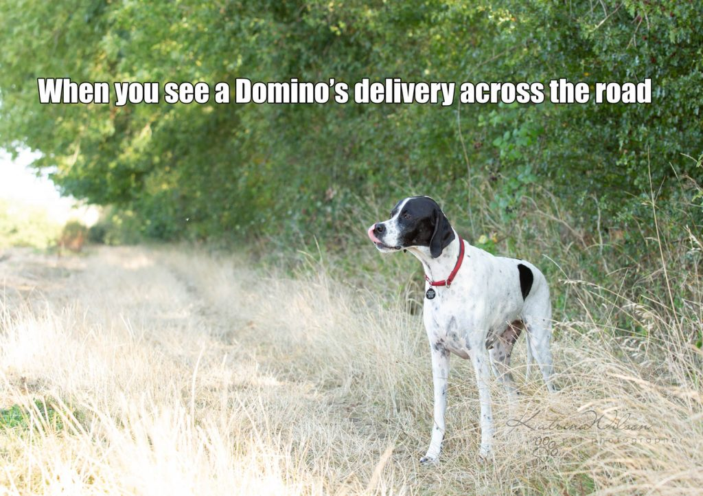 Lockdown Coronavirus Meme Katrina Wilson Dog Photography Bedfordshire-7