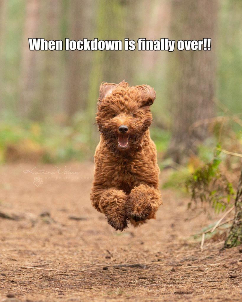 Lockdown Coronavirus Meme Katrina Wilson Dog Photography Bedfordshire-9
