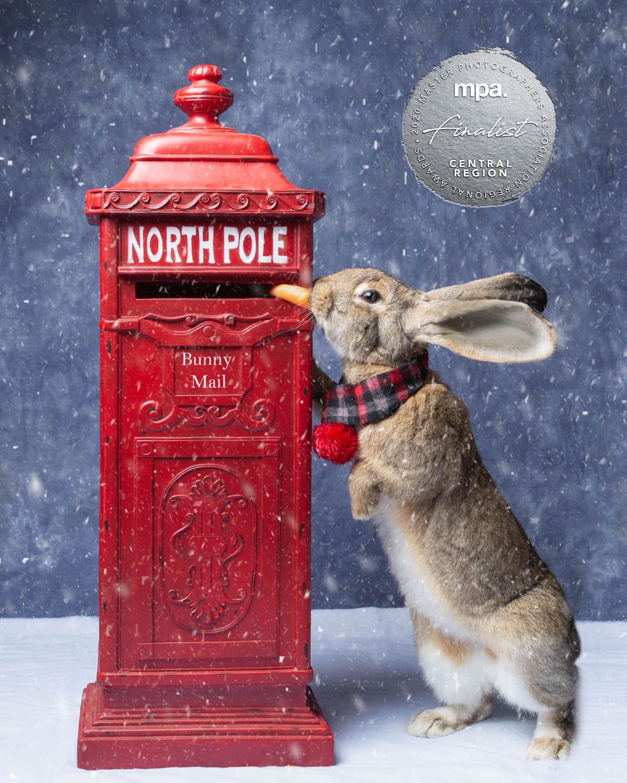 Commercial Christmas Rabbit - Katrina Wilson Dog Photographer Bedfordshire