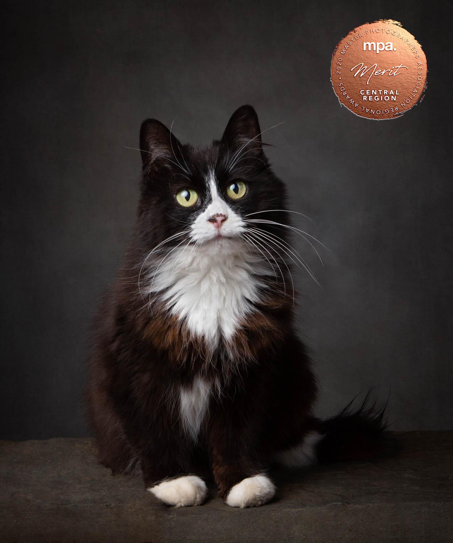 Rescue Black and White Cat - Katrina Wilson Cat Photographer Bedfordshire