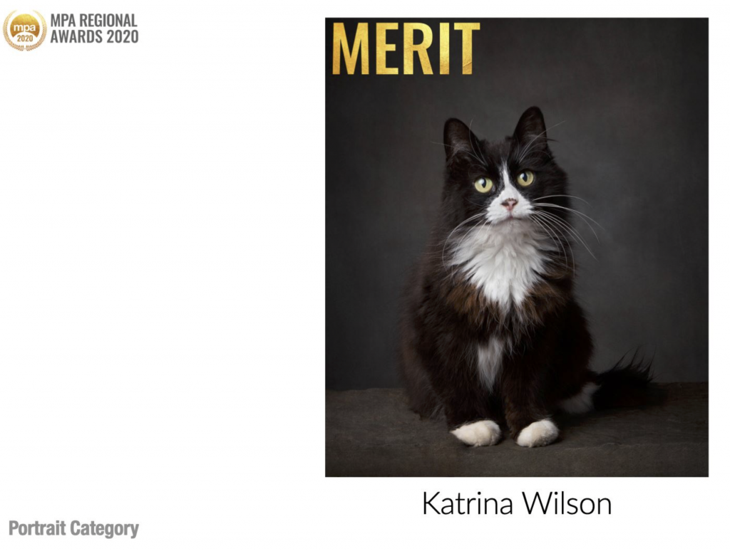 MPA Regional Awards - Katrina Wilson Cat Photographer Bedfordshire
