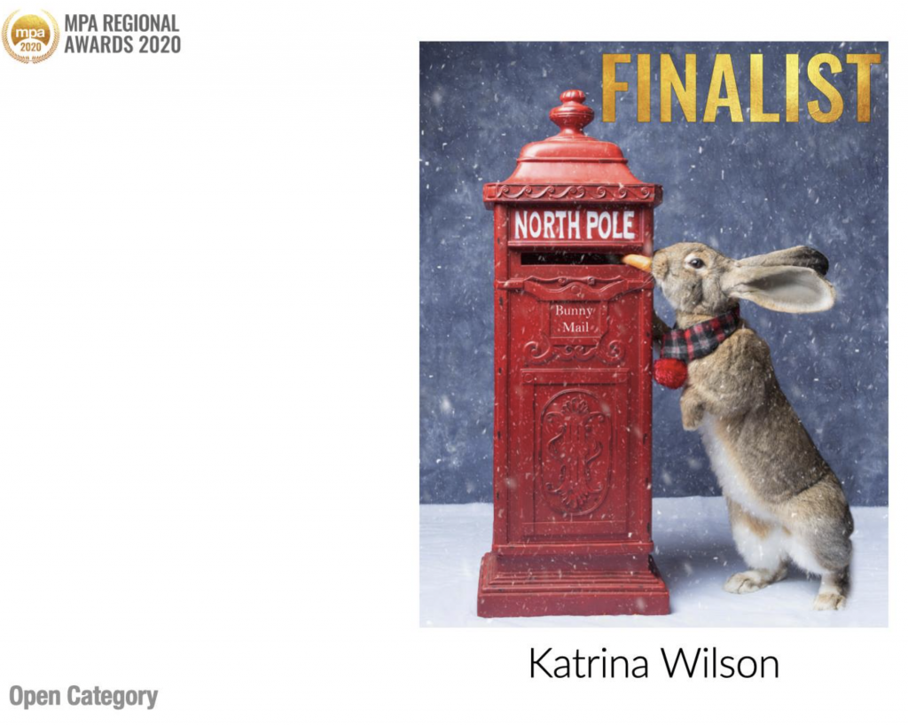 MPA Regional Awards - Katrina Wilson Dog Photographer Bedfordshire