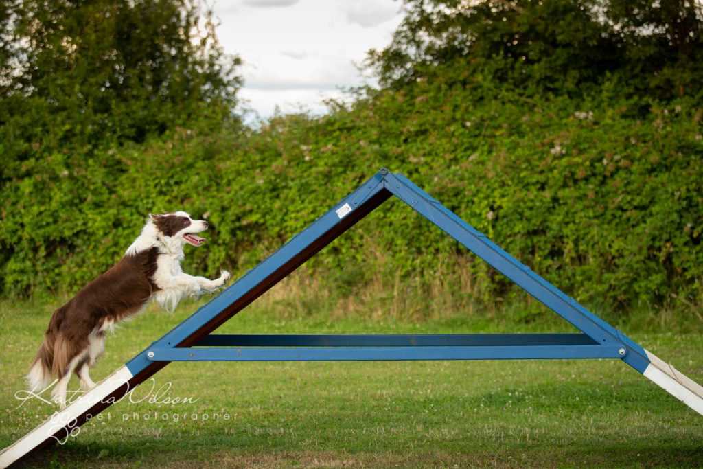 Four Paws Adventue Academy - Dog Playground - Katrina Wilson Dog Photographer Bedfordshire-10
