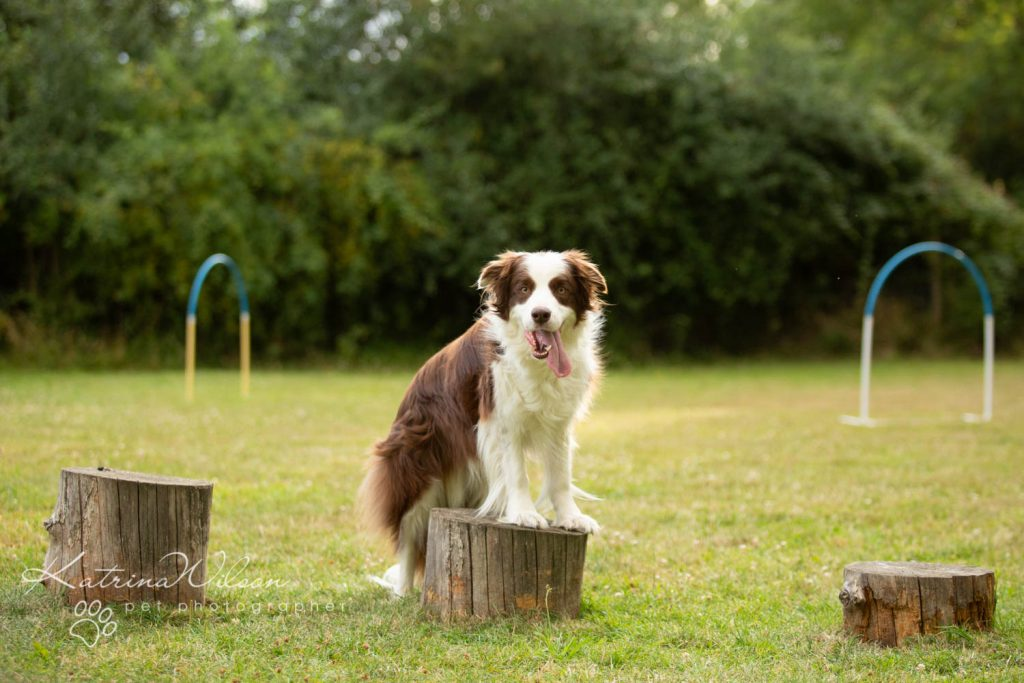 Four Paws Adventue Academy - Dog Playground - Katrina Wilson Dog Photographer Bedfordshire-14