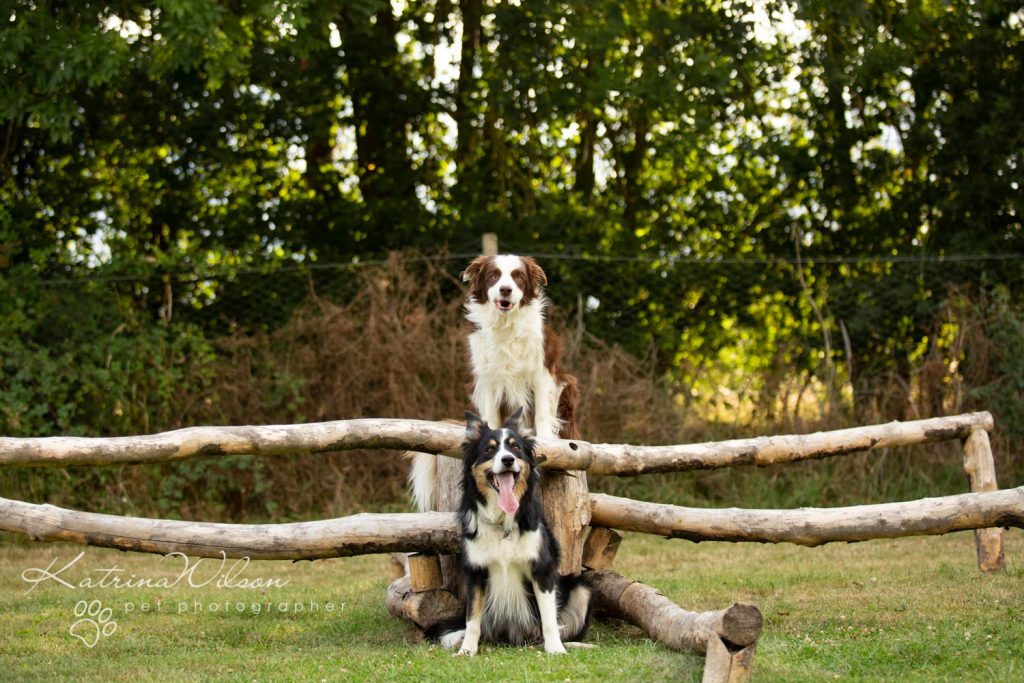 Four Paws Adventue Academy - Dog Playground - Katrina Wilson Dog Photographer Bedfordshire-16
