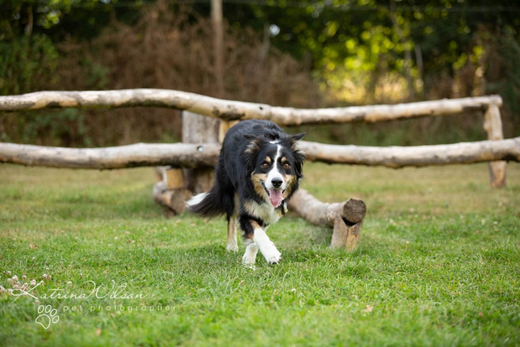 Four Paws Adventue Academy - Dog Playground - Katrina Wilson Dog Photographer Bedfordshire-17
