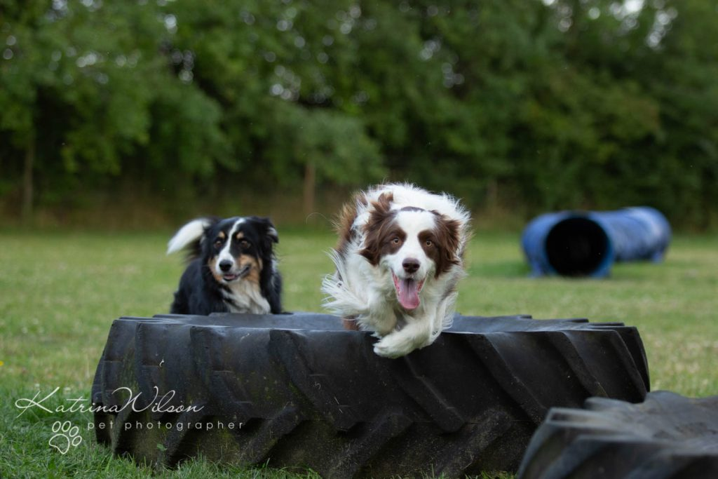 Four Paws Adventue Academy - Dog Playground - Katrina Wilson Dog Photographer Bedfordshire-2