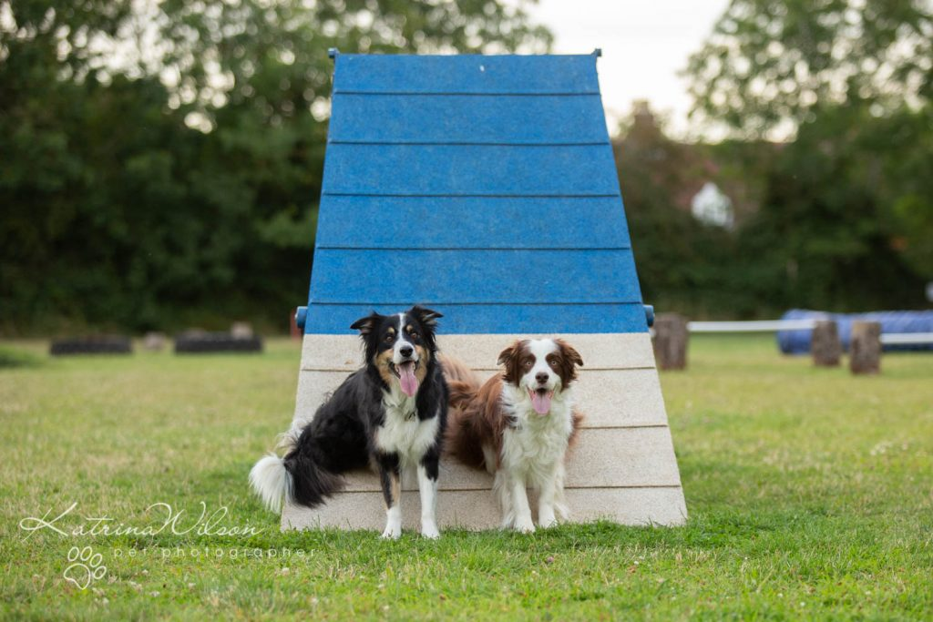 Four Paws Adventue Academy - Dog Playground - Katrina Wilson Dog Photographer Bedfordshire-24