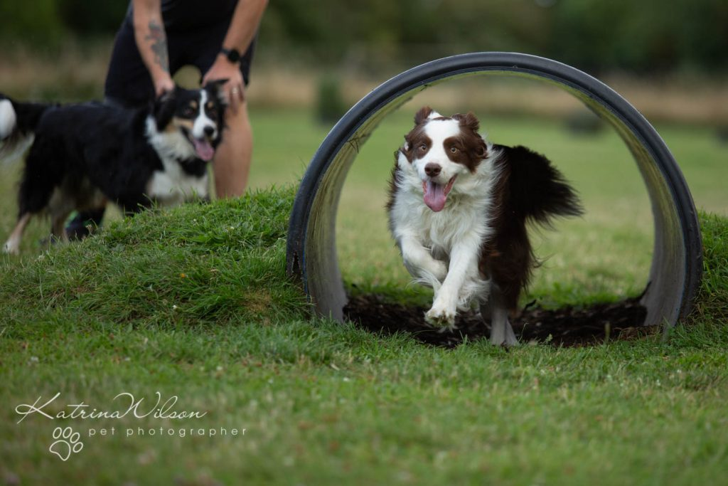 Four Paws Adventue Academy - Dog Playground - Katrina Wilson Dog Photographer Bedfordshire-7