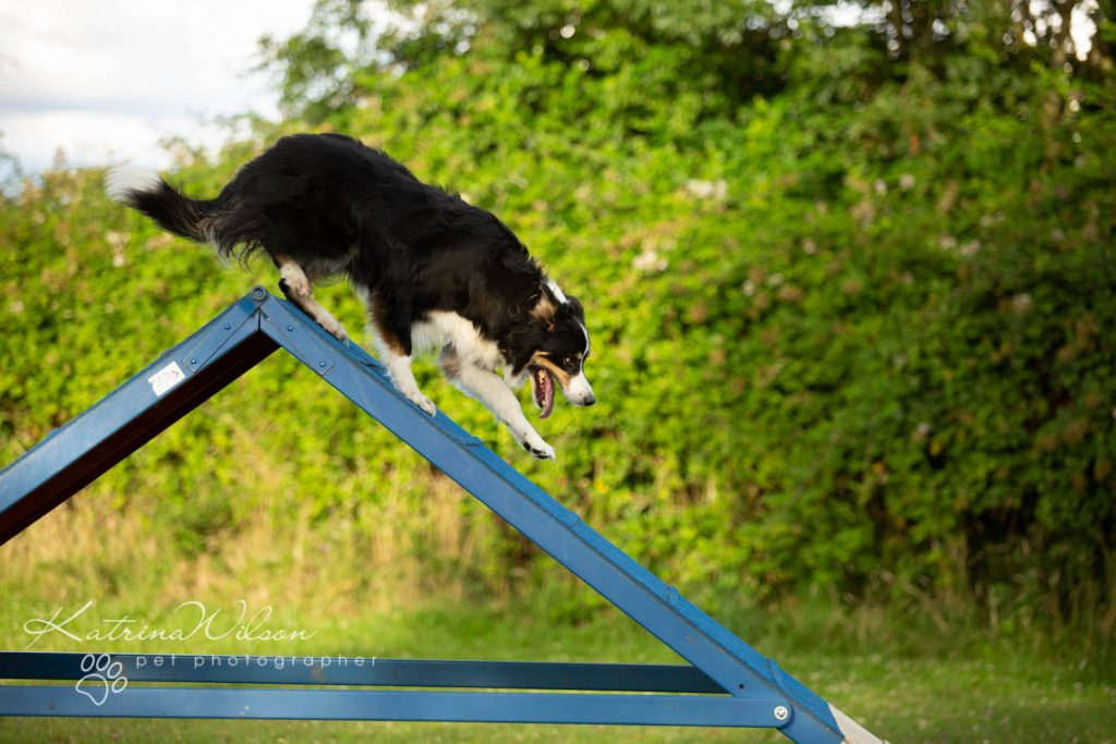 Four Paws Adventue Academy - Dog Playground - Katrina Wilson Dog Photographer Bedfordshire-9