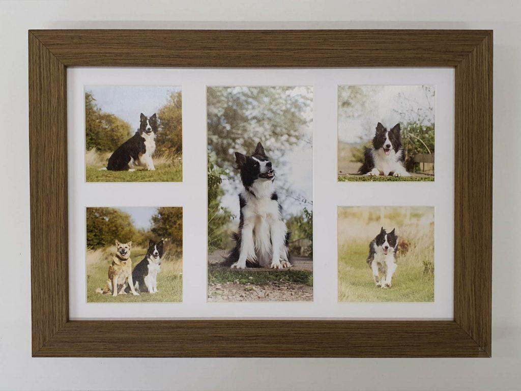 Frames - Katrina Wilson Dog Photography Bedfordshire-10