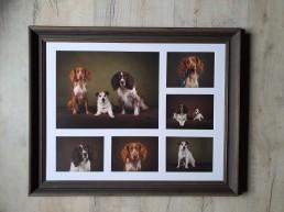 Spaniels Dog photographer