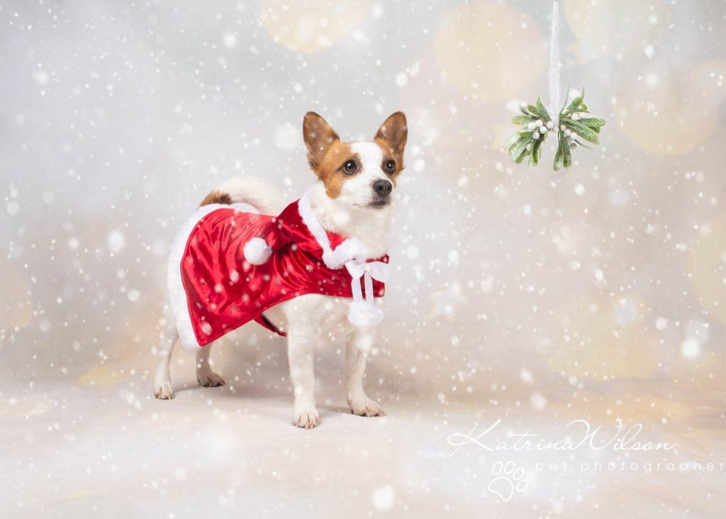 Christmas card animal cat rabbit - Katrina Wilson Dog Photography Bedfordshire