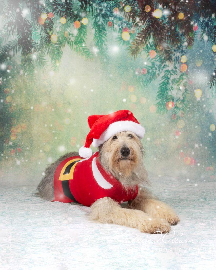 Christmas card animal cat rabbit - Katrina Wilson Dog Photography Bedfordshire-16