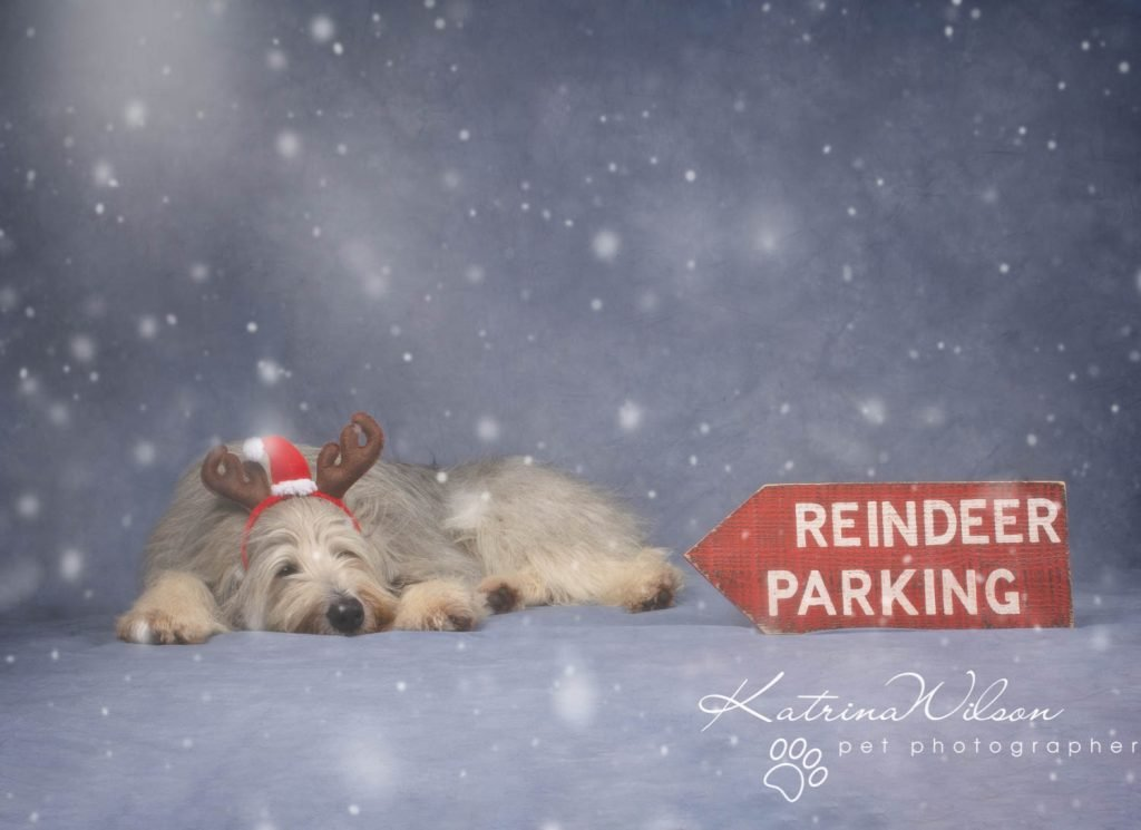 Christmas card animal cat rabbit - Katrina Wilson Dog Photography Bedfordshire-18