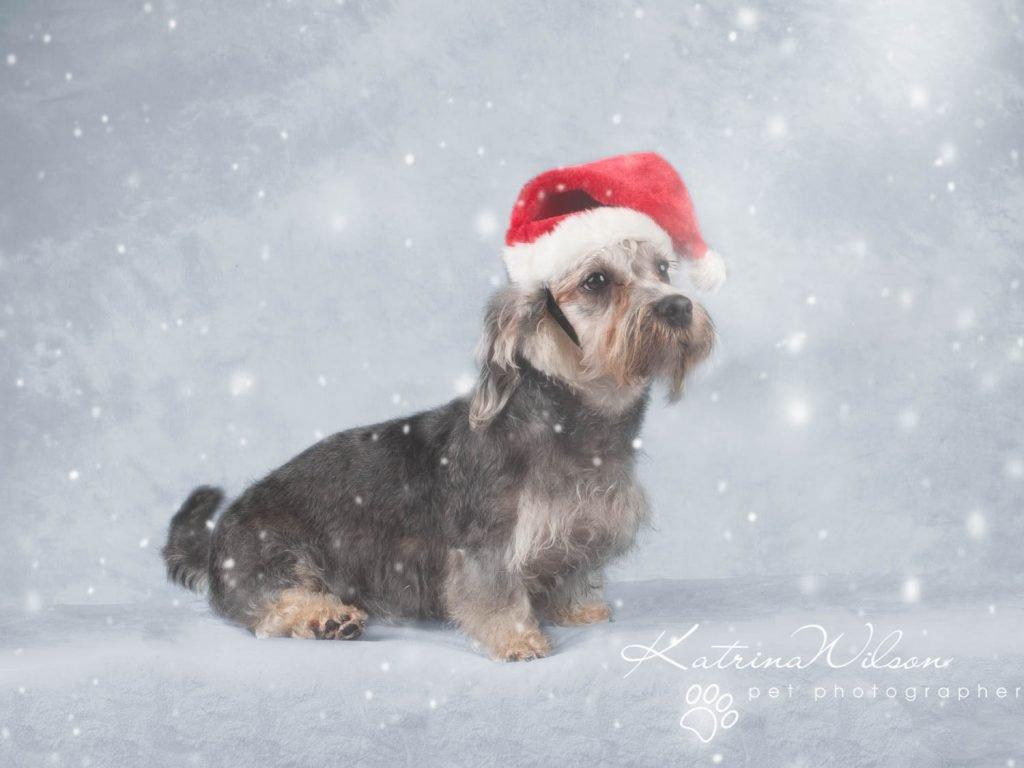 Christmas card animal cat rabbit - Katrina Wilson Dog Photography Bedfordshire-19