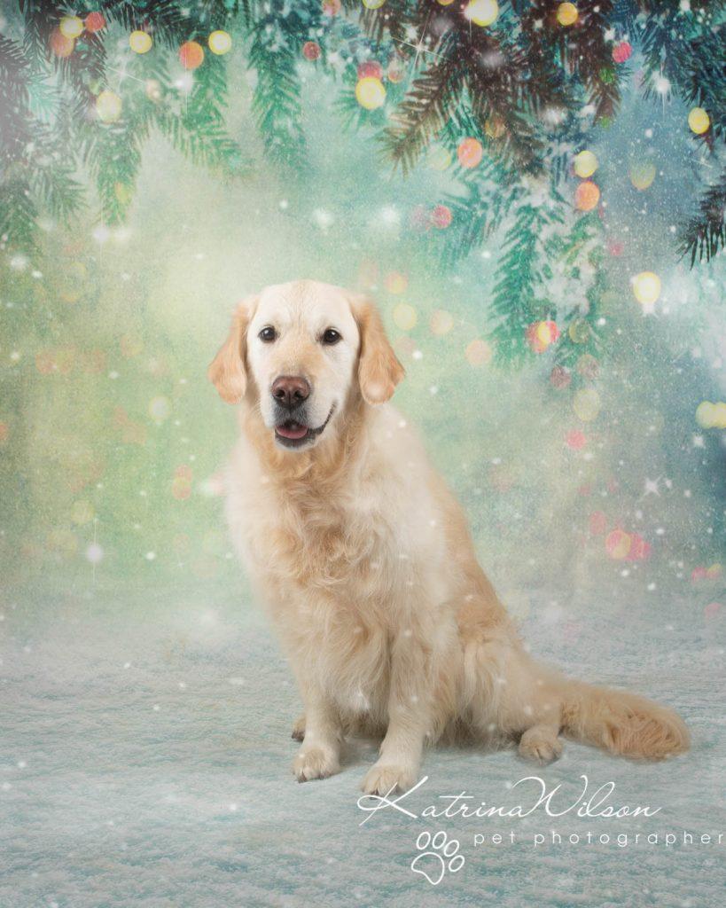 Christmas card animal cat rabbit - Katrina Wilson Dog Photography Bedfordshire-20