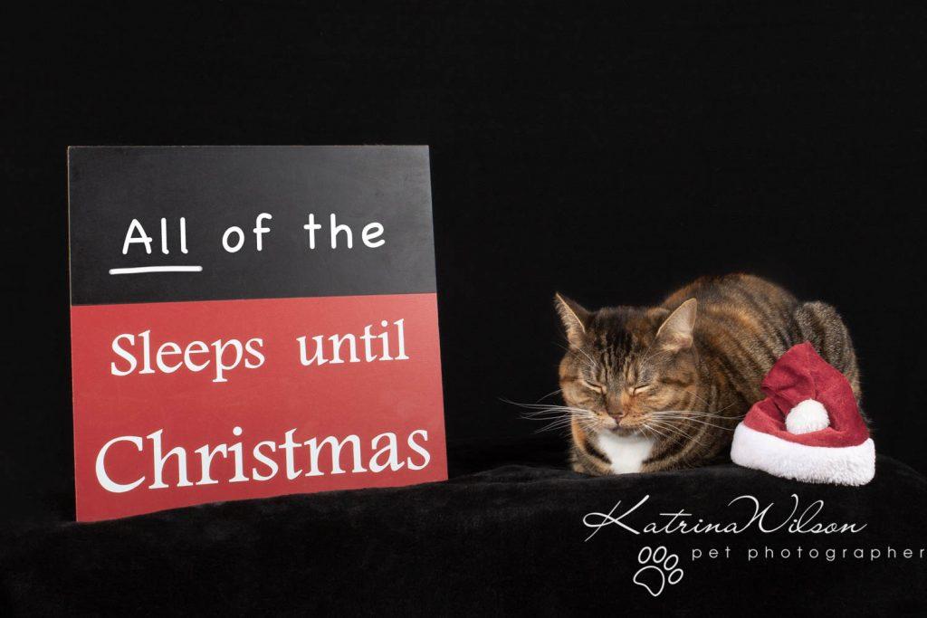 Christmas card animal cat rabbit - Katrina Wilson Dog Photography Bedfordshire-23
