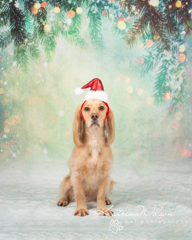 Christmas card animal cat rabbit - Katrina Wilson Dog Photography Bedfordshire-25