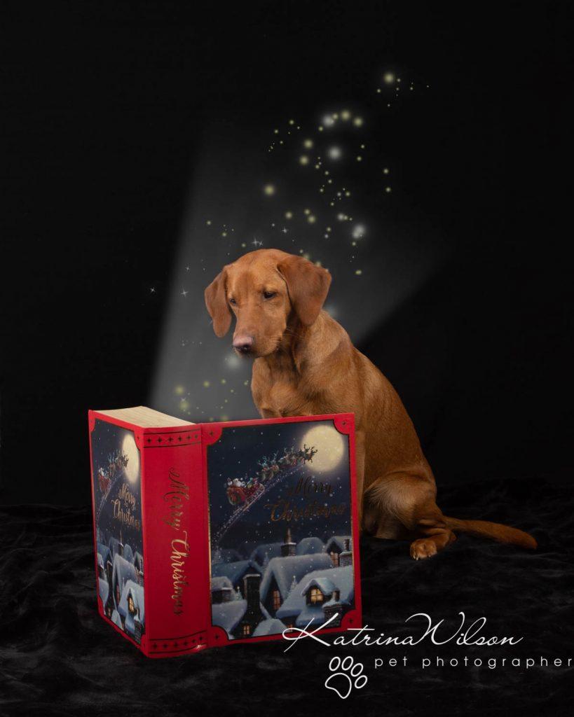 Christmas card animal cat rabbit - Katrina Wilson Dog Photography Bedfordshire-27