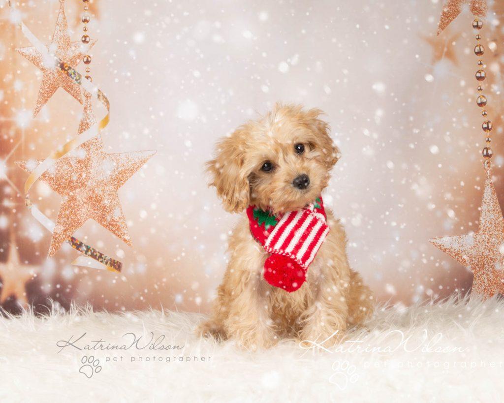 Christmas card animal cat rabbit - Katrina Wilson Dog Photography Bedfordshire-3