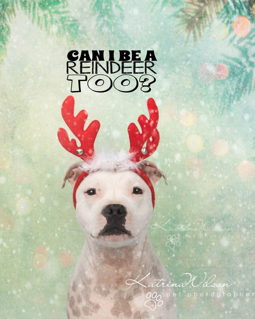 Christmas card animal cat rabbit - Katrina Wilson Dog Photography Bedfordshire-31