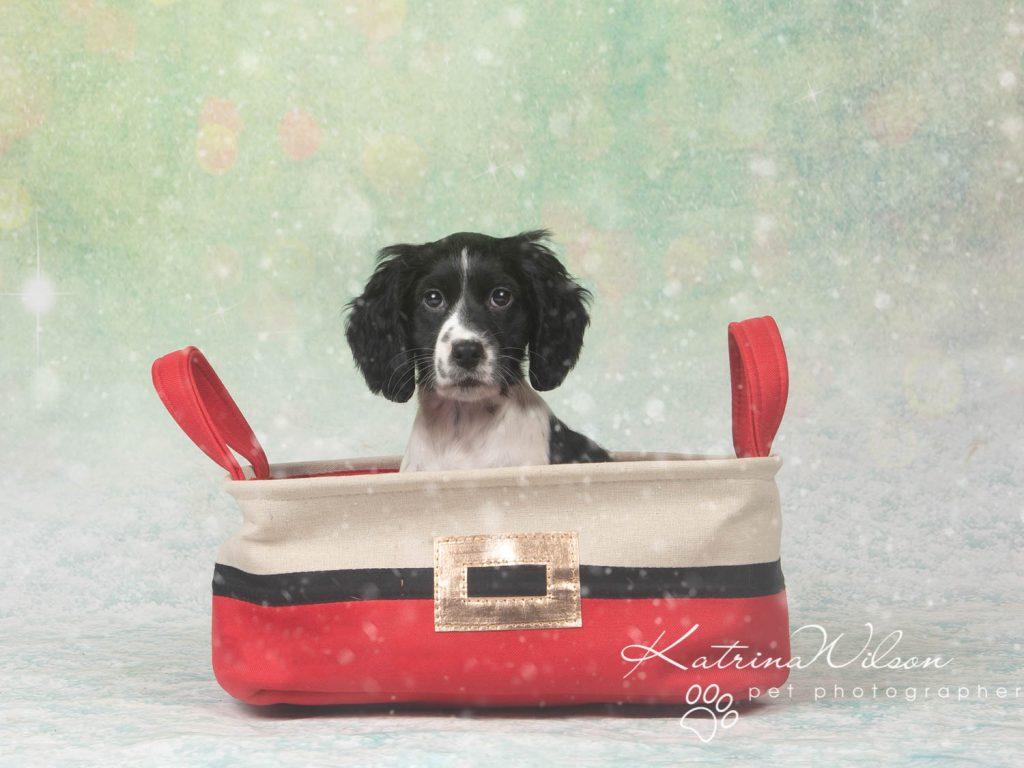 Christmas card animal cat rabbit - Katrina Wilson Dog Photography Bedfordshire-34
