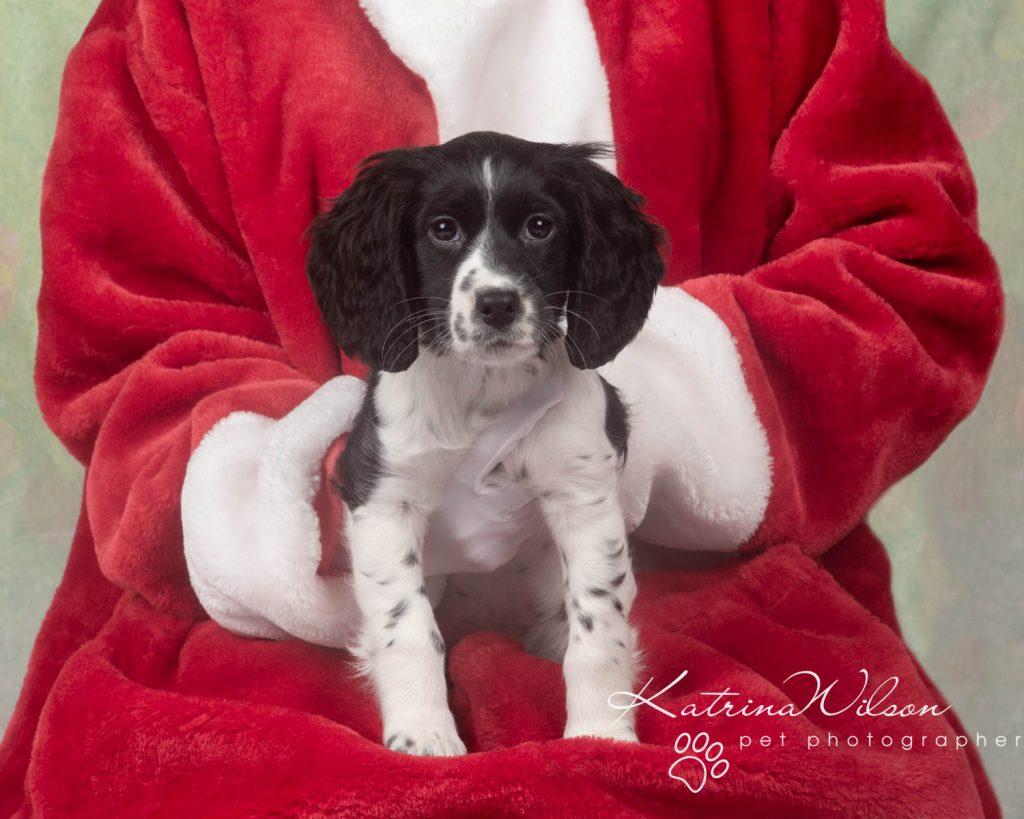 Christmas card animal cat rabbit - Katrina Wilson Dog Photography Bedfordshire-35