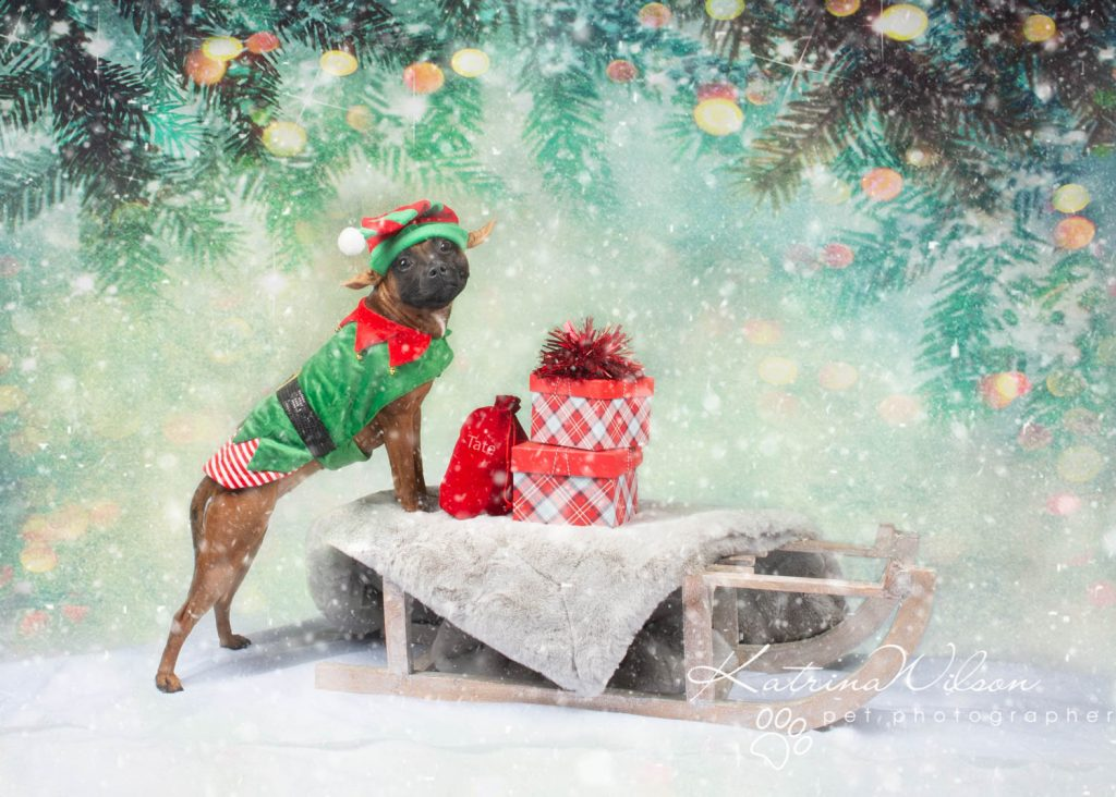 Christmas card animal cat rabbit - Katrina Wilson Dog Photography Bedfordshire-4