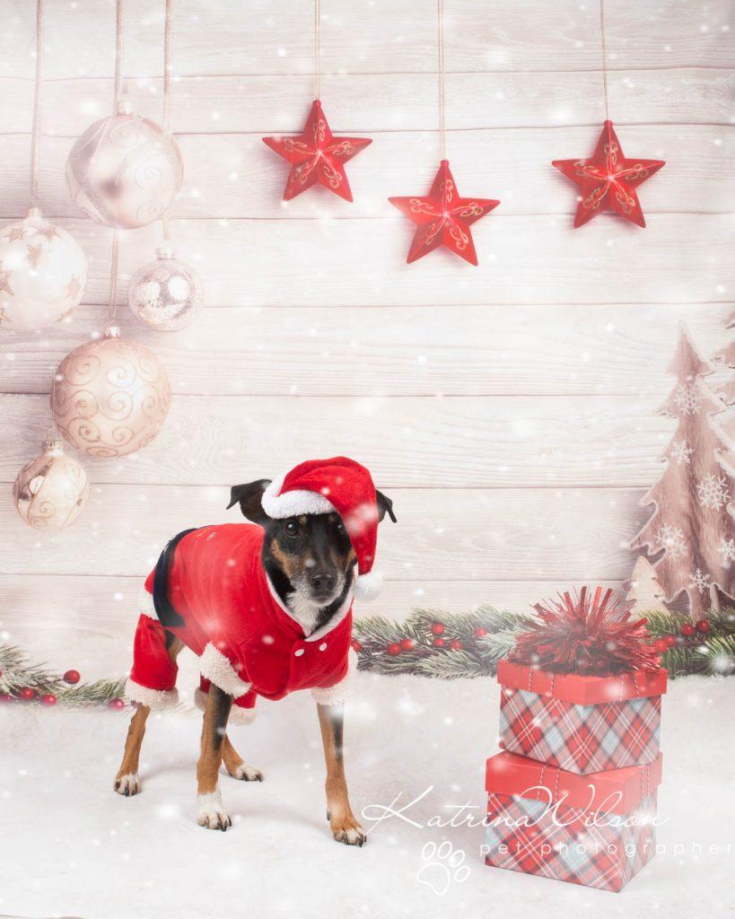 Christmas card animal cat rabbit - Katrina Wilson Dog Photography Bedfordshire-9